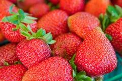 Fragole organiche fresche Immagini Stock Libere da Diritti