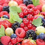 Fragole organiche fresche della raccolta della frutta di bacche delle bacche Immagini Stock