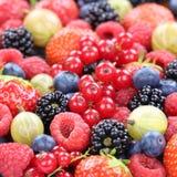 Fragole organiche fresche della raccolta della frutta di bacche delle bacche Fotografia Stock