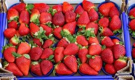 Fragole rosse coltivate facendo uso delle tecniche di agricoltura biologica Fotografie Stock