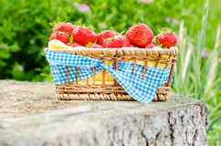 Fragole rosse fresche fotografia stock