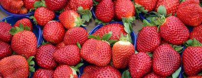 Fragole rosse mature dei canestri coltivate facendo uso delle tecniche di orga Immagini Stock