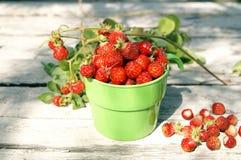 Fragole rosse sugose mature in giorno di estate pieno di sole Immagini Stock