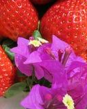 Fragole spagnole e dolci con il fiore della buganvillea Fotografia Stock