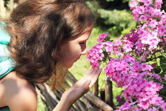 Fragrance of flowers Stock Images