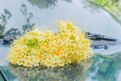 Fragrans de Fagraea, Loganiaceae, flor, en la falda delantera el coche con la luz natural fotos de archivo libres de regalías