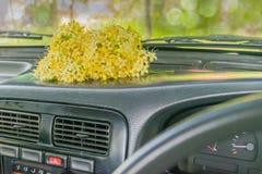 Fragrans de Fagraea, Loganiaceae, flor, en la zona delantera el coche con la luz natural imagenes de archivo