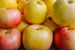 Fragrant autumn apples Stock Photo