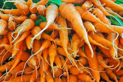 Fragrant carrot Stock Images
