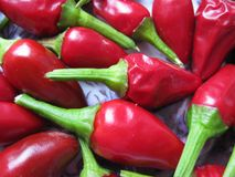 Fragrant chili pepper Royalty Free Stock Photo