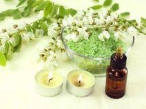 Fragrant flowers, acacia Stock Photos