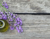 Fragrant flowers of lavender fresh Royalty Free Stock Photography