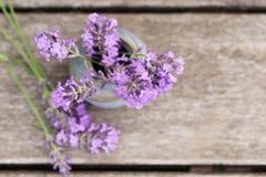 Fragrant flowers of lavender fresh Stock Photos