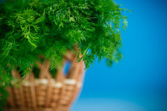 Fragrant fresh dill in a basket Royalty Free Stock Photos