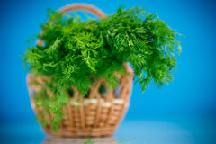 Fragrant fresh dill in a basket Stock Photos