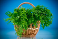 Fragrant fresh dill in a basket Stock Photography