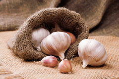 Fragrant garlic on background of coarse cloth. Food Royalty Free Stock Photography