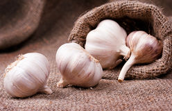 Fragrant garlic on background of coarse cloth. Food Stock Photo