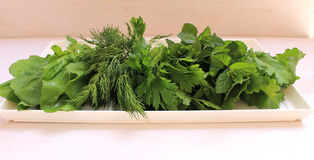Fragrant greens on a plate. Prepared for salad Royalty Free Stock Photography