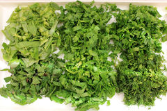Fragrant greens on a plate. Prepared for salad Royalty Free Stock Photos