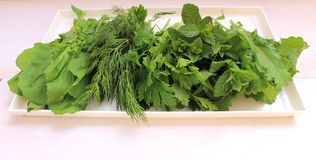 Fragrant greens on a plate. Prepared for salad Stock Photos