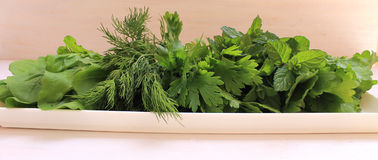 Fragrant greens on a plate. Prepared for salad Stock Images