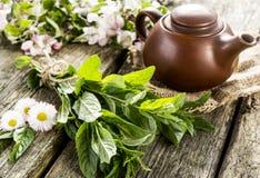 Fragrant herbata i mennica Obrazy Royalty Free