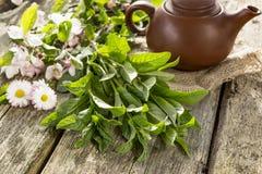 Fragrant herbata i mennica Zdjęcia Stock