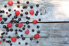 Fragrant, homegrown, scattered blackcurrant and red raspberry on grey background texture. Summer harvest Stock Photography