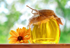 Fragrant honey Royalty Free Stock Photos