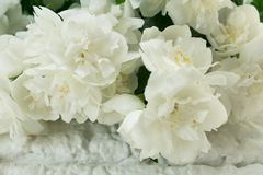 Fragrant jasmine bouquet against a white  wall royalty free stock image