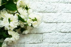 Fragrant jasmine bouquet against a white brick wall. Copy space stock photo