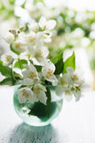 Fragrant jasmine bouquet Royalty Free Stock Image