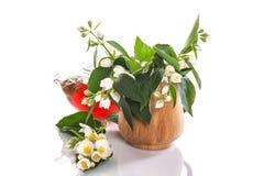 Fragrant jasmine tea Stock Photos