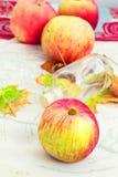 Fragrant jesieni dojrzały jabłko Obrazy Royalty Free