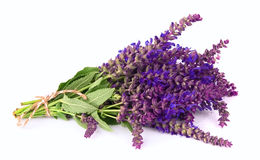 Fragrant lavender. Bouquet of a fragrant lavender on a white background Royalty Free Stock Image