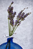 Fragrant Lavender Stock Photography