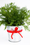 The fragrant leaves of fennel are in a small bucket Royalty Free Stock Images