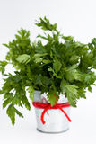 The fragrant leaves of parsley is a small bucket Royalty Free Stock Photography