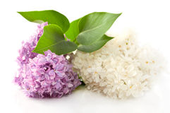 Fragrant lilac flowers Stock Image