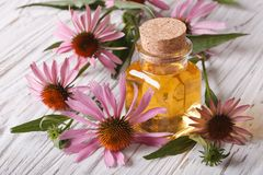 Fragrant medical tincture of Echinacea purpurea closeup Royalty Free Stock Photo