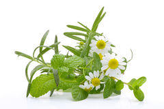 Fragrant medicinal herbs. On white background Royalty Free Stock Photography
