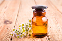 fragrant oil in a glass bottle with camomile flowers Royalty Free Stock Photo