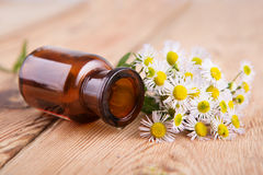 Fragrant oil in a glass bottle with camomile flowers on wooden t Royalty Free Stock Image