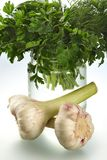 Fragrant parsley and garlic Royalty Free Stock Image