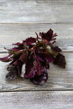 Fragrant purple basil leaves Royalty Free Stock Images