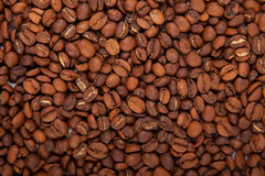 Fragrant roasted coffee beans Royalty Free Stock Images