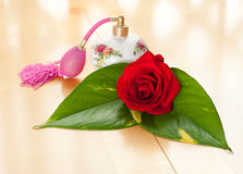 Fragrant Rose Stock Image