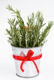 Fragrant rosemary stands in a small bucket Royalty Free Stock Photos