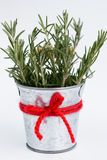 Fragrant rosemary stands in a small bucket Royalty Free Stock Photo